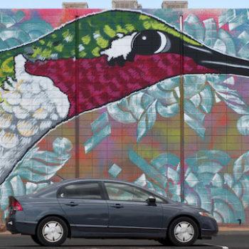 hummingbird mural